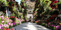 حديقة الأورمان2