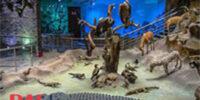متحف العلم الحيواني